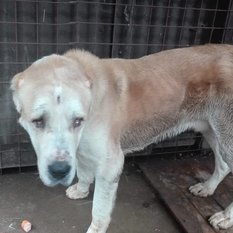 Odebrání týraných psů
