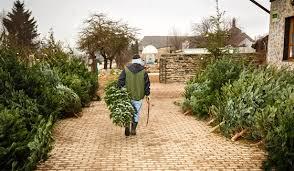 Předvánoční období a zima, láká zloděje stromků a dřeva
